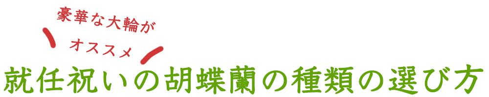 就任祝いの胡蝶蘭の種類の選び方