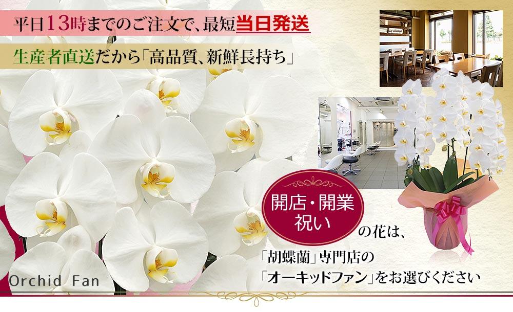 開店祝いの胡蝶蘭を販売中!相場や色、立札の書き方、贈るタイミングも解説