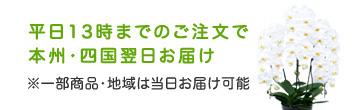 平日13時までのご注文で 本州・四国翌日お届け ※一部商品・地域は当日お届け可能