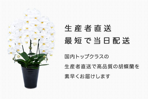 生産者直送・最短で当日配送 国内トップクラスの生産者直送で高品質の胡蝶蘭を素早くお届けします